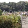 神代植物園に行ってきました