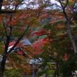 浜松市役所から車で40分「豊橋のもみじ寺 高野山真言宗 普門寺/永代供養 樹木葬・納骨堂・ペット供養墓」のご案内!