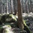 天川村でハイキングという名の・・・。続き。