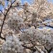 3月の通院記録②&お花見