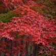 室生寺の紅葉