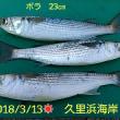 笑転爺の釣行記 3月13日☀ 久里浜海岸