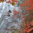 桃 洞 滝