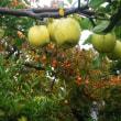 17-10-18 リンゴ