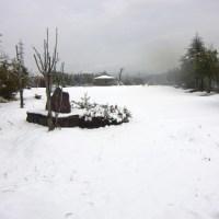明るくなってから降り始めたボタン雪。スリッパ・ブチ犬ジローと遊ぶ。