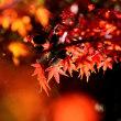 11/22 「篝火花 浜姫榊」 花・鳥・風月の写真です