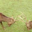 鹿の角きり