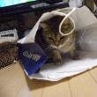 圭佑が猫である証拠とは?