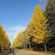 札幌の晩秋