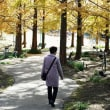 モネの庭の紅葉8