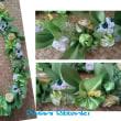 White × Green Bouquet Lei