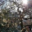 二条城庭園ランチ