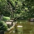 ё 長い横木に止まった、カワセミの姿、ドキドキ眺め ё B公園(岐阜県岐阜市)