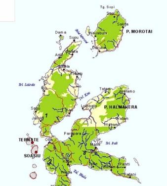 モロタイ島でモリンガを植林 - ...