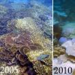 アンダマン海水温上昇で珊瑚礁が絶滅の危機