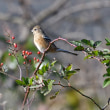 河川敷の鳥たち!