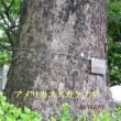 5月の旅 日比谷公園   平成29年5月17日(水)