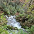 奥大山・秋色の木谷沢渓流