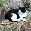 写真映りのそれほど悪くないネコ Not so bad photogenic cat