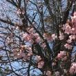 花咲く北国の春~♪