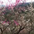 湯河原梅林「梅の宴」