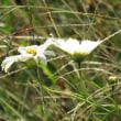 散歩コースの花