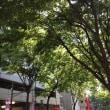 My town, Harajuku
