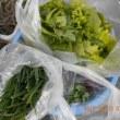 今日の収穫 リーフレタス ニラ 初収穫のキヌサヤ