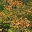 秋の天狗高原