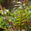 庭に咲く秋の花と秋の蝶