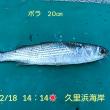 笑転爺の釣行記 2月18日☀ 浦賀・久里浜