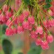 ★5月の雨上がりの花の潤い 2018