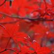 2017/11/20 杉村公園の紅葉見頃