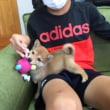 フェルト玩具『アンパンマンボール』☆豆柴ちゃんの遊び相手
