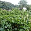 農園でチョイ汗(2017/9/19)