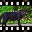 久し振りの私の猫語だったのですが、黒猫さん、立ち止まってこっちを見てくれました