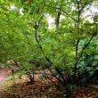 樹木ウォッチング冬から夏へ317ワタゲカマツカ