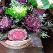 🎵 花屋の店先で見~つけた、 【光子】 という名のミニ葉牡丹を