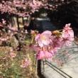 松山城を走る
