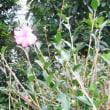 昨今の秋の花
