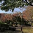 舞岡公園の紅葉
