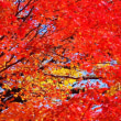 朽木の紅葉 2017
