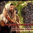 「わたしはまことのぶどうの木」 ヨハネによる福音書15章1~11節
