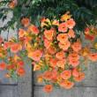 メモ帳848ページ ノウゼンカズラは夏花の代表格、猛暑の中でも綺麗です