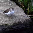 里川の野鳥