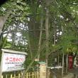 東海道2日目 品川宿~川崎宿 ~2017.8.11(金)