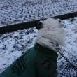 吹雪く散歩