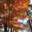 紅葉を探して2009『北横岳』。。
