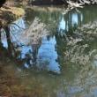 お松の池の桜