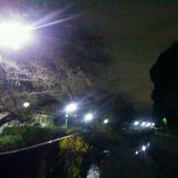 【早朝のお散歩】 18/12/10 「登竜門」 - 今季一番の寒さに耐えて